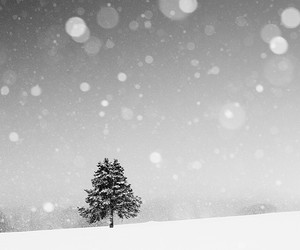 black and white, canada, and forest image