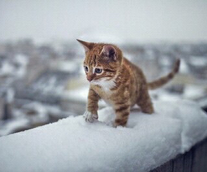 cat, cute, and snow image