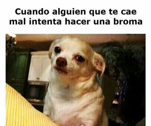 meme, frases, and funny image