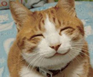 cat, smile, and animal image