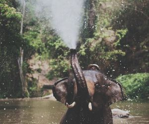 animal, beautiful, and elephant image