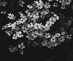 b&w, daisies, and flowers image