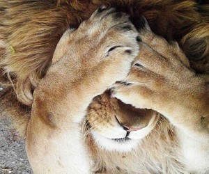adorable, lion, and tumblr image