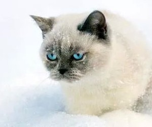 cat, frio, and snow image