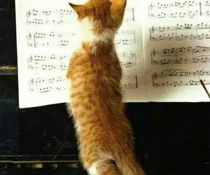 animals, cats, and music image