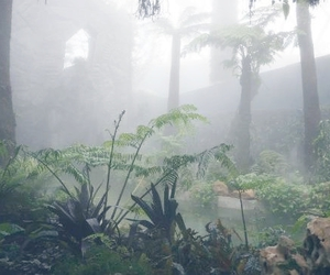 pale, plants, and grunge image
