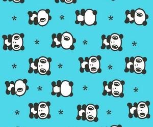 bear and wallpaper image