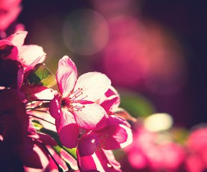 beautiful, flower, and inspiration image