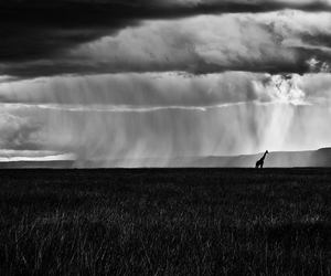africa, beauty, and black and white image