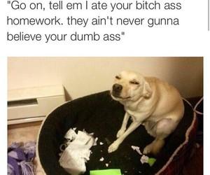 funny, dog, and homework image