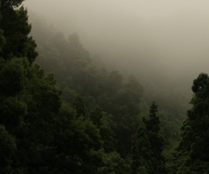 forest, indie, and nature image