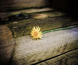 inspiration, flower, and photography image