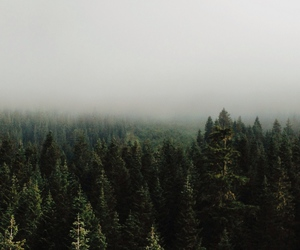 foggy, forest, and inspiration image