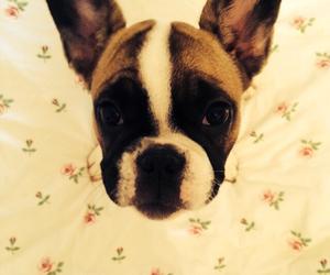 bulldog, dog, and sweet image