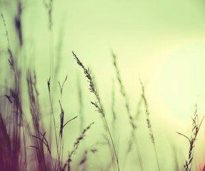 grass, green, and inspiration image
