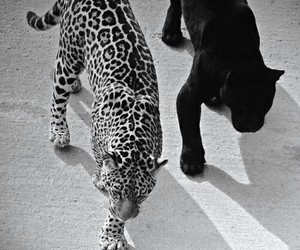 black and white, animals, and black image