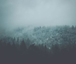 forest, wood, and grunge image