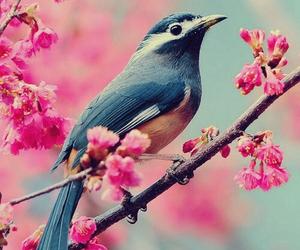 amazing, animals, and beautiful image
