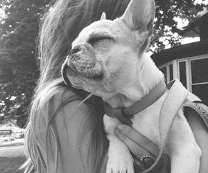 black&white, bulldog, and dog image