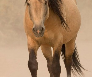 dust, mare, and horse image