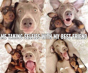 dog, selfie, and friends image