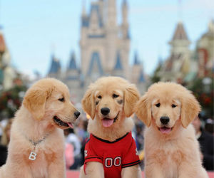 disney, puppies, and cute image
