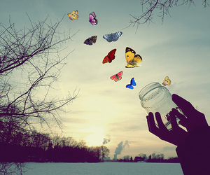 butterfly and ceu image