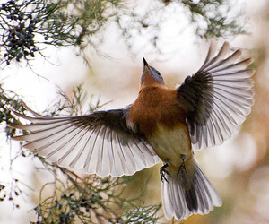 bird, beauty, and nature image