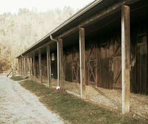 barn and horses image