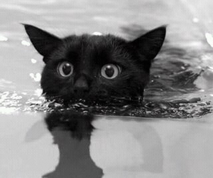 cat, water, and animal image