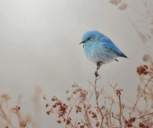 bird, blue, and small image