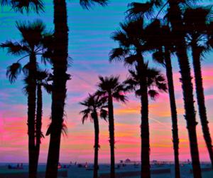 beach, palm trees, and sky image