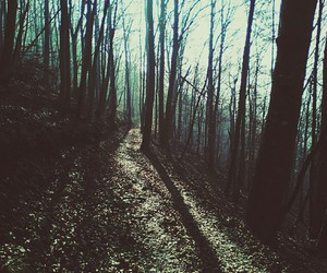 forest, grunge, and hipsters image