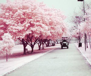 pink and tree image