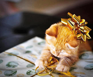 christmas, cat, and cute image