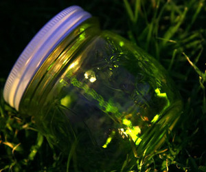 fireflies, jar, and light image
