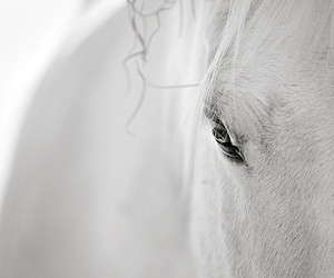 horse, white, and lovely image