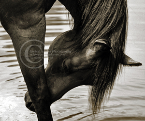 animals, calm, and horse image