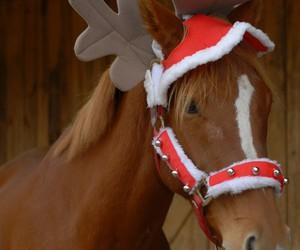 beautiful, christmas, and horse image