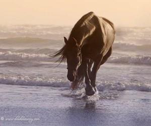 horse, beautiful, and sea image