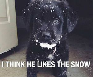 snow, cute, and dog image