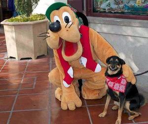 dog, pluto, and funny image