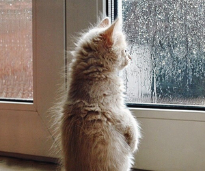 cat, cute, and rain image
