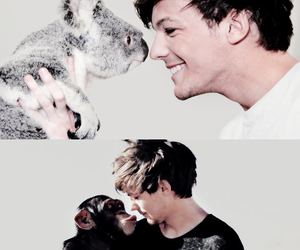 louis tomlinson, one direction, and animals image
