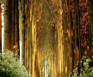 tree, nature, and belgium image
