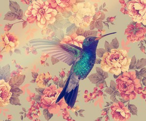 background, flowers, and fly image