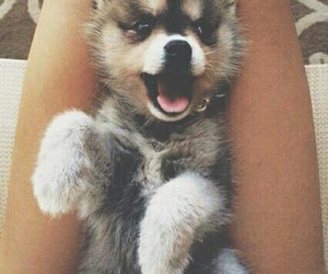 cute dogs image