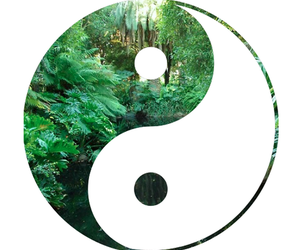 yin yang and forest image