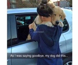 dog, love, and goodbye image