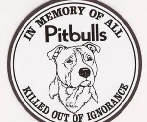 dog, animal, and ignorance image